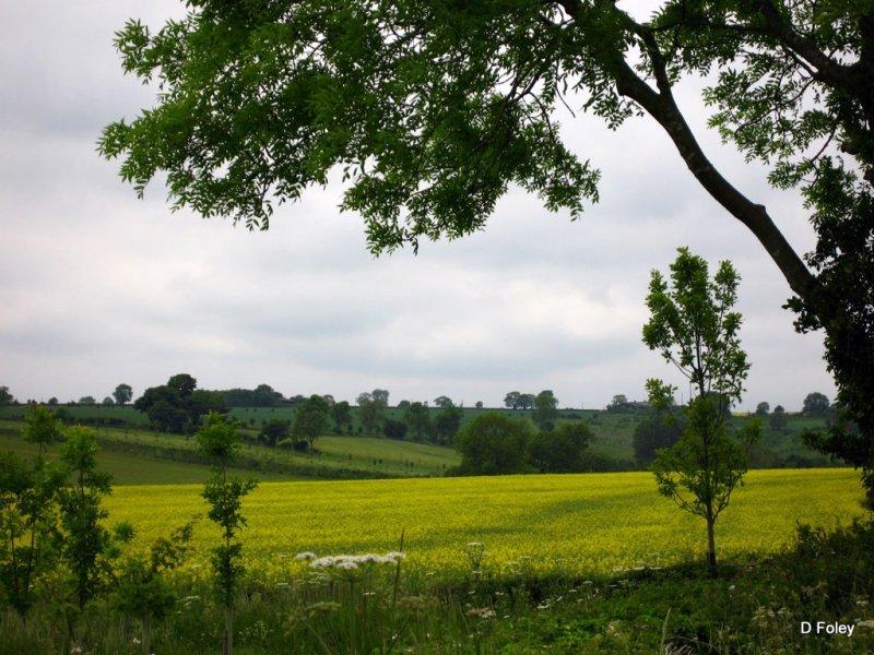 landscape-212